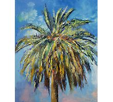 Canary Island Date Palm Photographic Print