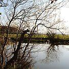Pond by Dfilmuk Photos