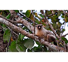 Unknown monkey in Pantanal Brazil Photographic Print