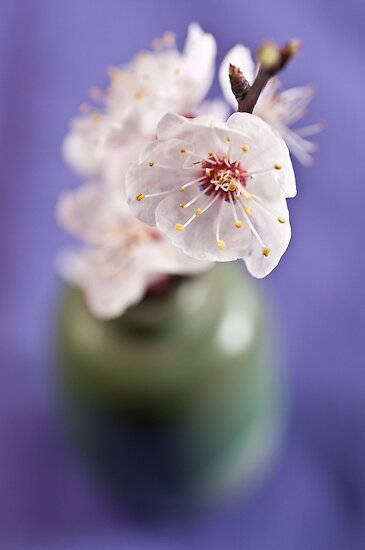 Blossoms by Ilva Beretta