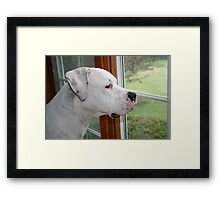I wanna go out and play! Framed Print