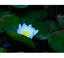 Lily Pad Paradise Photographic Print