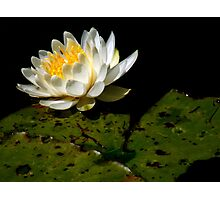The Water Garden ~ Part Ten Photographic Print