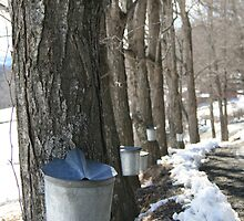 Sugaring Day by Jesse Wheadon
