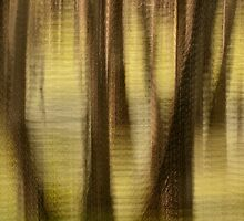 Cypresses - Magnolia Plantation and Gardens by JHRphotoART