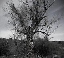 Ruine aux Volsques by Jason Lee Jodoin