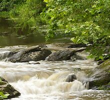 Unami Creek at Trinity Bridge #2 by MotherNature