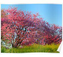 Springtime in the Smokies Poster