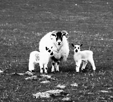 Mother and twins together by Sophie MacLeod