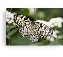 Paper Kite Butterfly - Idea leuconoe Metal Print