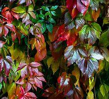 Fall Freshness  by Blon-Dee