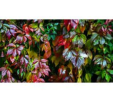 Fall Freshness  Photographic Print