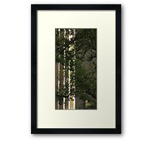 Urban Nature Framed Print