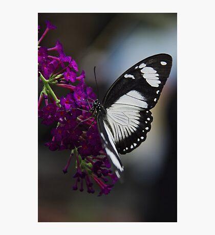 Butterfly - Carleton University, Ottawa, Ontario Photographic Print
