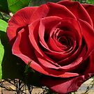 Red Red Rose by MaeBelle