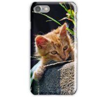 GINGER KITTEN iPhone Case/Skin