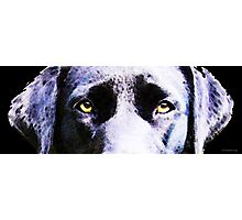 Black Labrador Retriever Dog Art - Lab Eyes Photographic Print