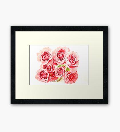 Rose Blooms Framed Print
