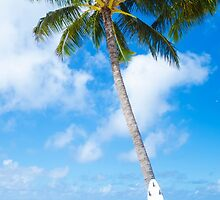 Coconut Palm tree with curfboard in Hawaii by ellensmile