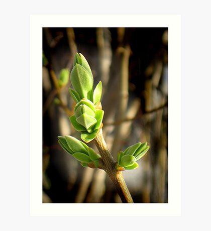 Beautiful Green of Spring Art Print