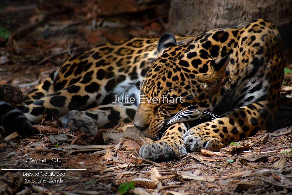 Jaguar Napping by Julie Everhart