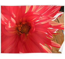 Journey into Scarlet - Red Dahlia Macro Poster