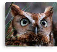 A Screech Owl Named Lana Canvas Print