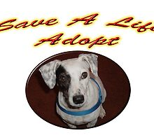Save A Life Adopt by lawrencebaird