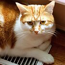 Cat on a Hot Tin Vent by Stephen D. Miller