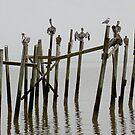 Mississippi Pelicans by Stephen D. Miller