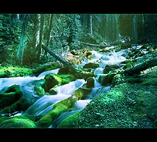 Forest Stream (Bordered) by Chad Kruger