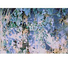 Vintage Ivy Edit Photographic Print