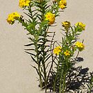Dune Flowers by Stephen D. Miller