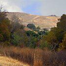 Coyote Hills 2 by Ellen Cotton