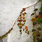 Leaves climbing a Wall by jihyelee