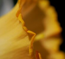 daffy ruffles by Sunshinesmile83
