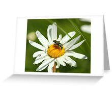 Shiny bettle Greeting Card