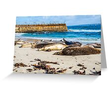 SEALS AT THE CHILDREN'S POOL Greeting Card