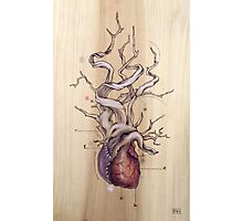 Driftwood Heart 04 Photographic Print
