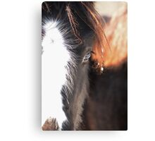 Winter Filly Canvas Print