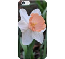 Orange and White Daffodil in the Garden iPhone Case/Skin