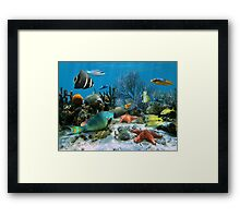 Coral reef and starfish Framed Print