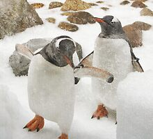 penguins by werxj