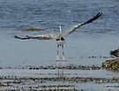 Lift Off! - A Grey Heron Launches by David Clarke
