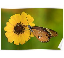 The Butterfly and Yellow Flower Poster