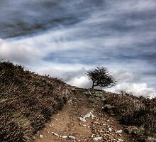 Lonely Tree on Win Hill, Derbyshire by Chris Bunce