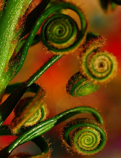 Spirals by duncandragon