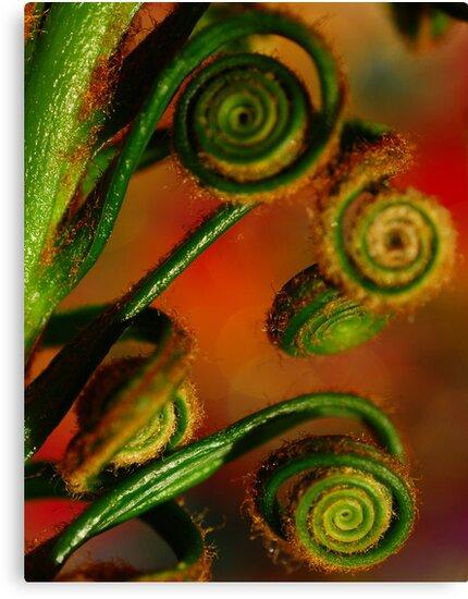 Spirals by duncandragon