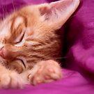 Sleepy Head by Gormaymax