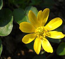 Yellow Flower. by Vitta